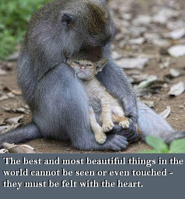 cat-monkey