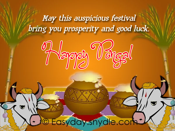 Pongal wishes messages and pongal greetings easyday pongal greetings m4hsunfo