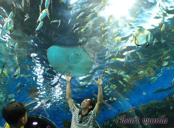 Manila Ocean Park Photo: Maniladailyphoto