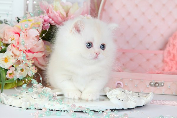 valentine pet