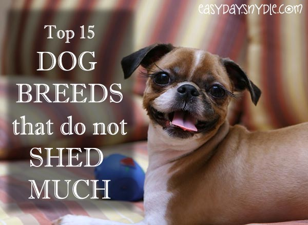 dog-breeds-that-do-not-shed