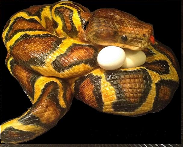 The Python Cake -