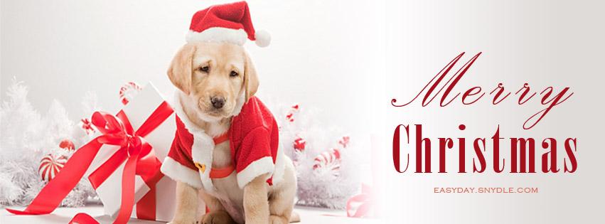 dog-christmas-cover