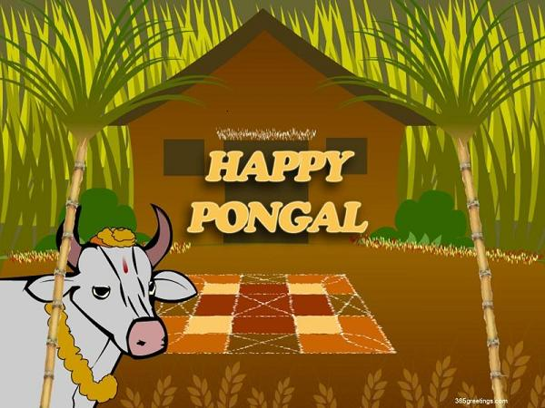 pongal-wallpaper