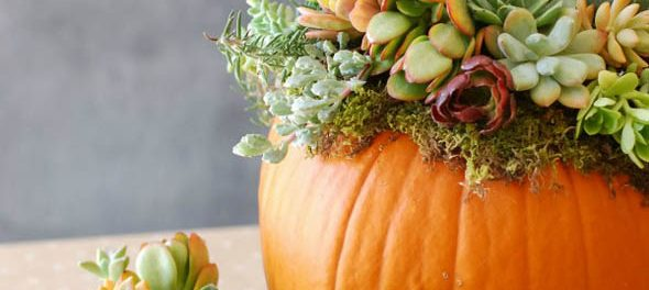 decorating-with-pumpkins-7