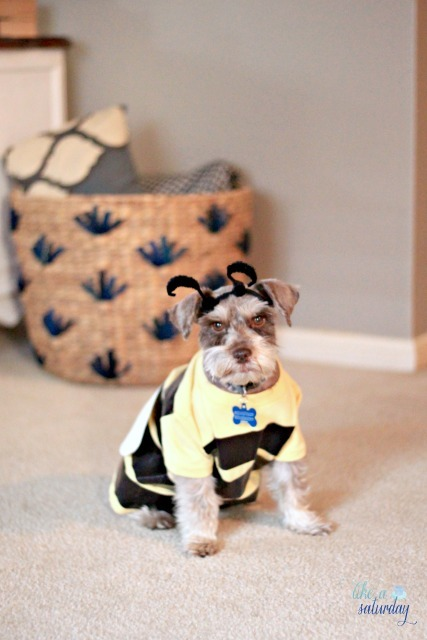 halloween-costumes-for-dogs-10