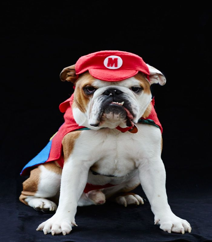 halloween-costumes-for-dogs-12