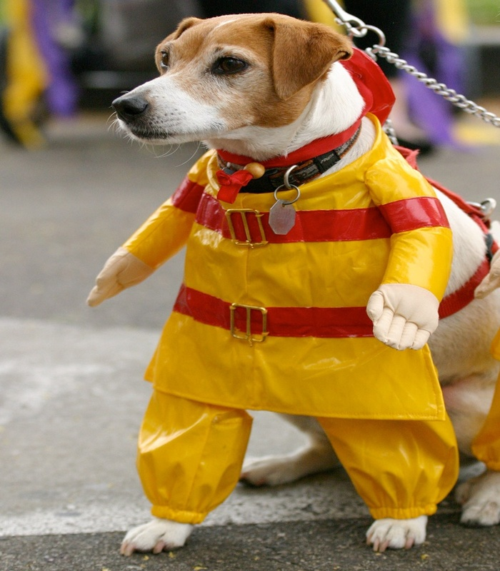 halloween-costumes-for-dogs-14