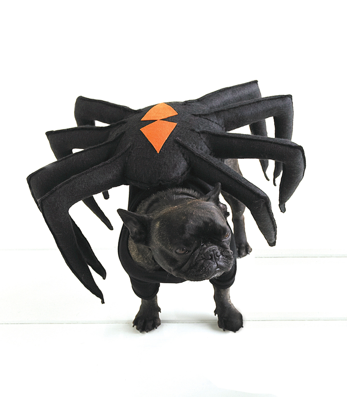 halloween-costumes-for-dogs-18