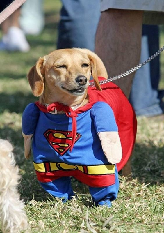 halloween-costumes-for-dogs-2