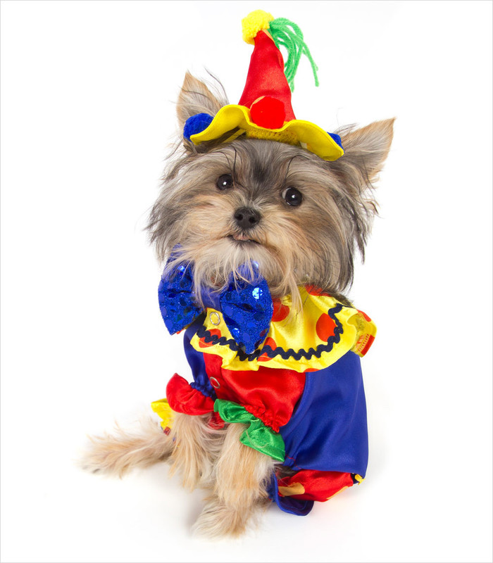 halloween-costumes-for-dogs-20