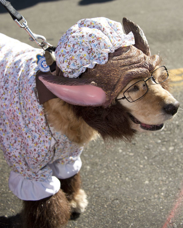 halloween-costumes-for-dogs-23