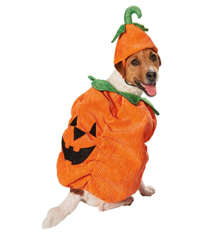 halloween-costumes-for-dogs-24