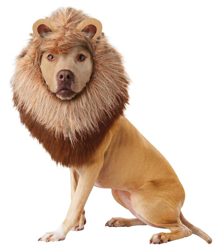 halloween-costumes-for-dogs-26
