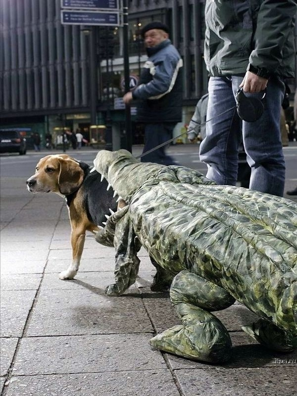 halloween-costumes-for-dogs-28