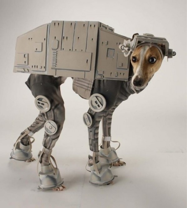 halloween-costumes-for-dogs-29