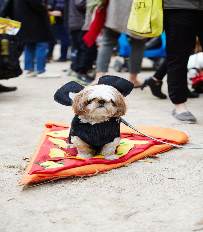 halloween-costumes-for-dogs-30