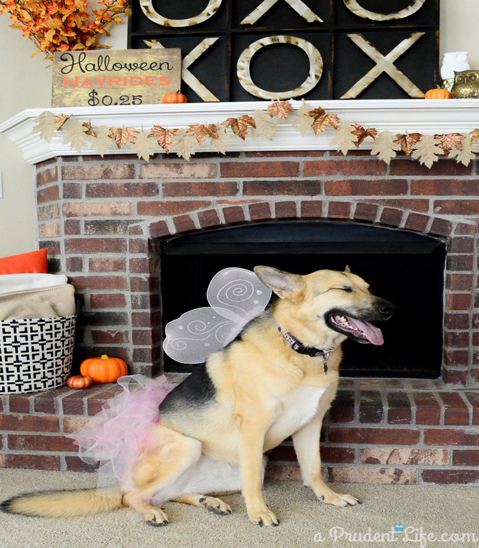 halloween-costumes-for-dogs-5