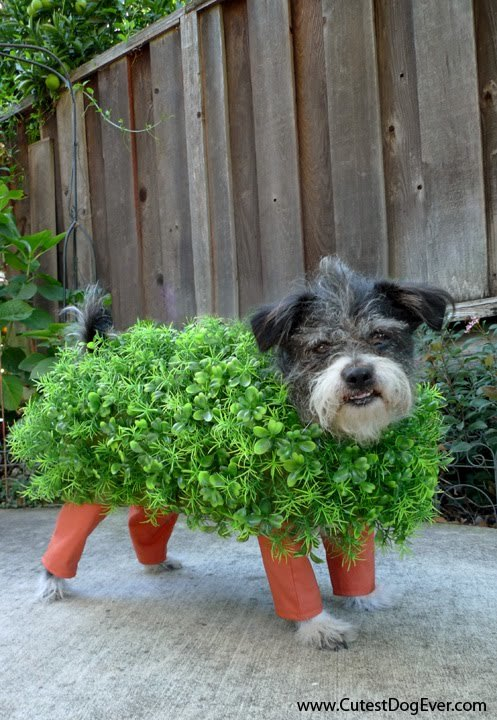halloween-costumes-for-dogs-6