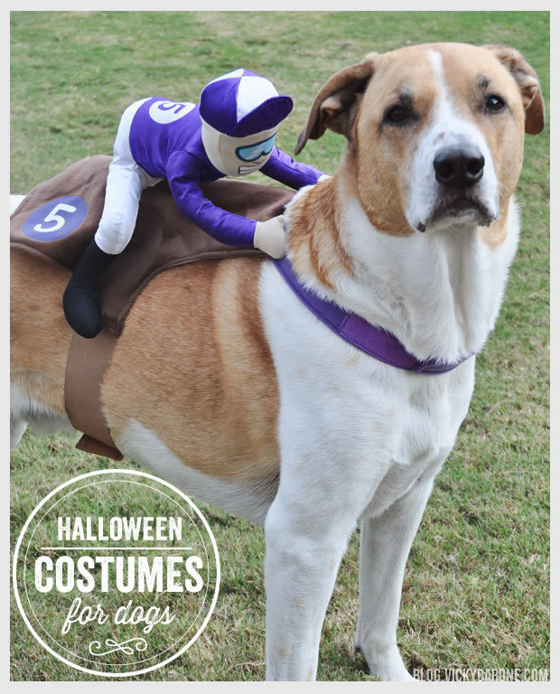 halloween-costumes-for-dogs-8