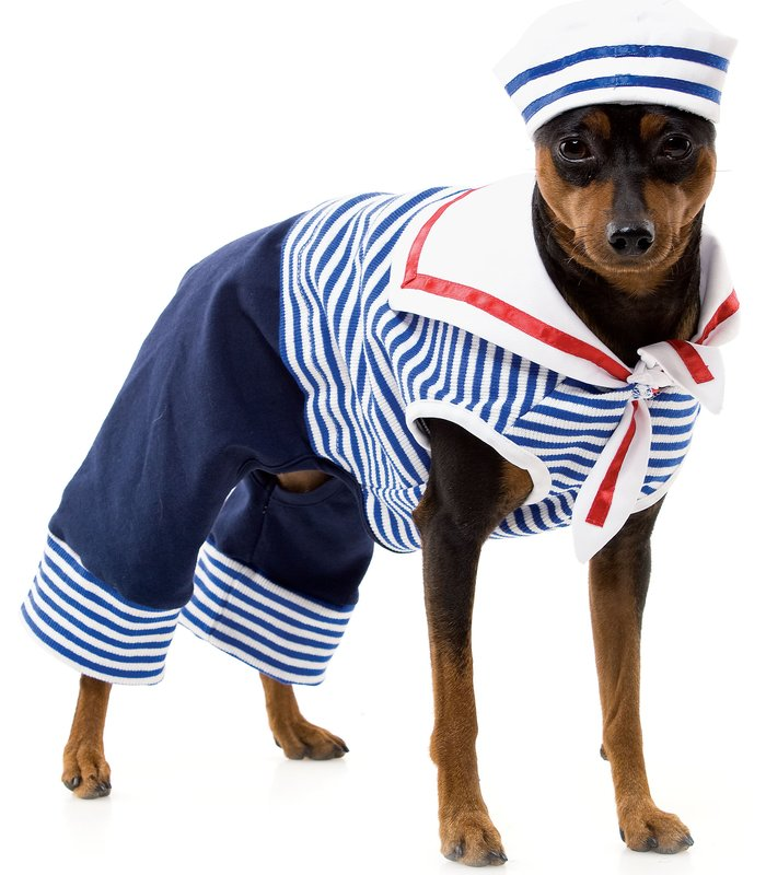 halloween-costumes-for-dogs-9