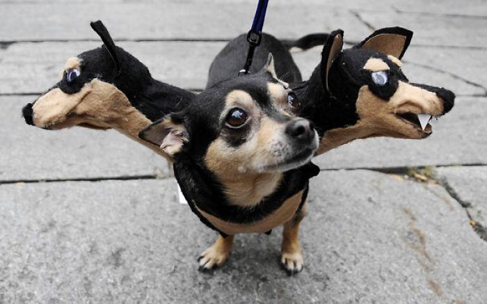 pet-halloween-costume-271__700